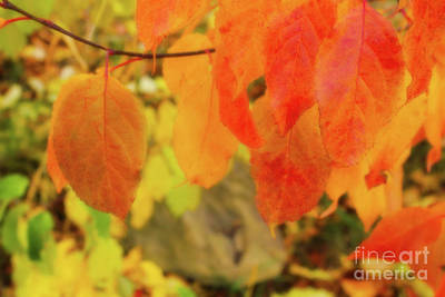 Digital Art - Sand Cherry Fall Leaves by Donna L Munro