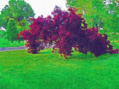 Photograph - Sand Cherry In Watercolors by Skyler Tipton