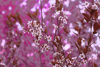 Digital Art - Sand Cherry Pinks by Donna L Munro