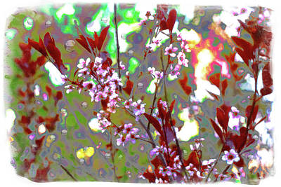 Digital Art - Sand Cherry With Bubbles by Donna L Munro