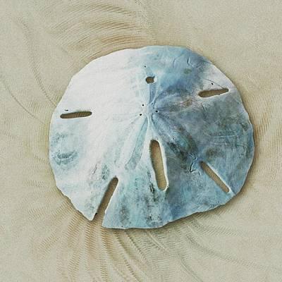 Photograph - Sand Dollar by Anastasiya Malakhova