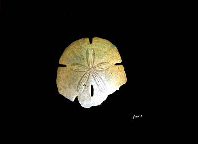 Photograph - Sand Dollar by Fred Wilson