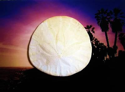 Photograph - Sand Dollar by Mary Ellen Frazee