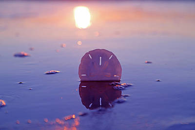 Topsail Island Photograph - Sand Dollar Sunset by Betsy Knapp