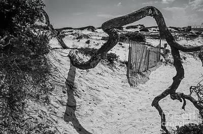 Panama City Beach Photograph - Sand Dune by Debbie Green