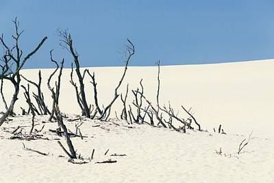 Photograph - Sand Dune With Dead Trees by Chevy Fleet