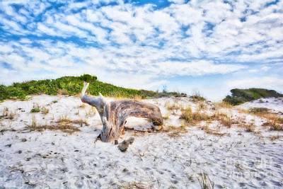 Photograph - Sand Dunes At Grayton Beach by Mel Steinhauer