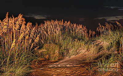 Photograph - Sand Dunes At Night On The Outer Banks by Dan Carmichael