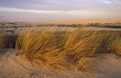 Sand Dunes At Oso Flaco Nature Art Print by Rich Reid