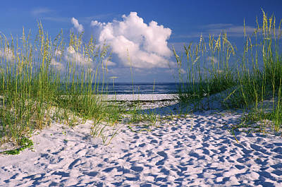 Photograph - Sand Dunes Beach Path by Marie Hicks