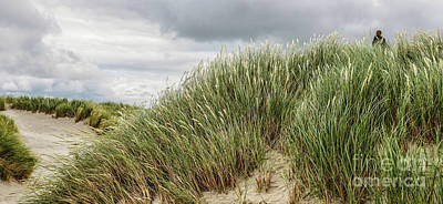 Photograph - Sand Dunes Of Maghera Beach by Lexa Harpell