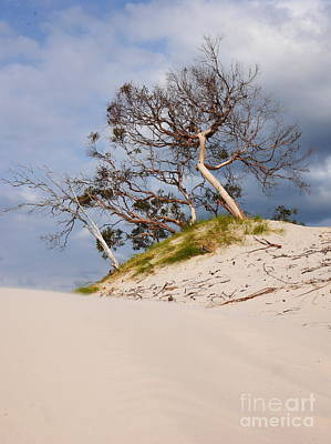 Photograph - Sand Dunes Series 3 by Lexa Harpell