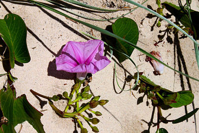 Photograph - Sand Flowers by Susan Vineyard