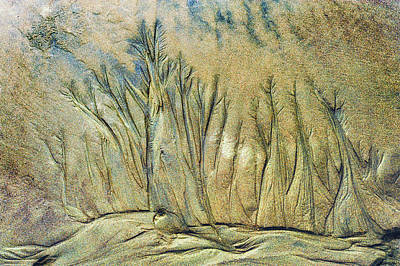Photograph - Sand Forest by Dee Browning