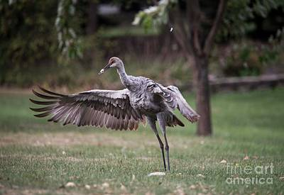 Photograph - Sand Hill Crane Chick - 4 by David Bearden
