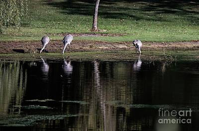 Photograph - Sand Hill Cranes Dining Room by David Bearden