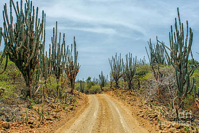 Photograph - Sand Road On A Caribbean Island by Patricia Hofmeester