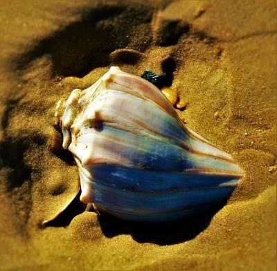Photograph - Sand Shell by William Bartholomew