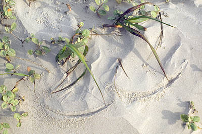 Sand Sumie One Art Print by Clyde Replogle