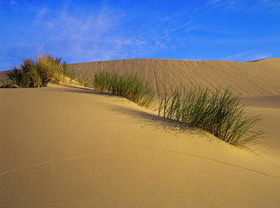 Photograph - Sand Tracks by Robert Potts
