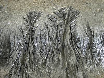 Photograph - Sand Trees by Charlene Reinauer