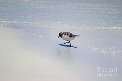 Photograph - Sanderling And Ocean Bubbles by Karen Adams