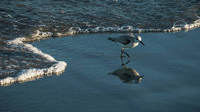 Photograph - Sanderling Reflection Delray Beach Florida by Lawrence S Richardson Jr