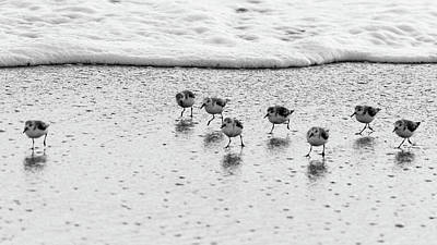 Photograph - Sanderling Sprint 2 Delray Beach Florida by Lawrence S Richardson Jr