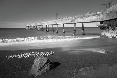 Photograph - Sanderlings By The Pier by Laura Macky