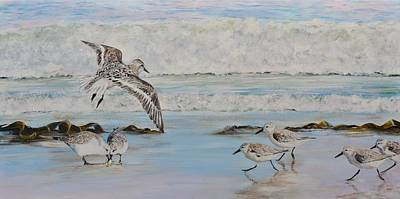 Sea Birds Painting - Sanderlings by Mike Paget