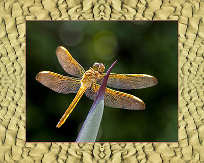 Photograph - Sandflow Dragonfly by Bell And Todd