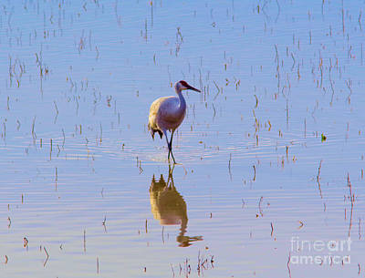 Photograph - Sandhill And Reflection by Jeff Swan