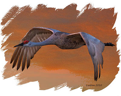 Crane Digital Art - Sandhill Crane 1 by Larry Linton