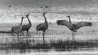 Photograph - Sandhill Crane 2 by Laura Macky