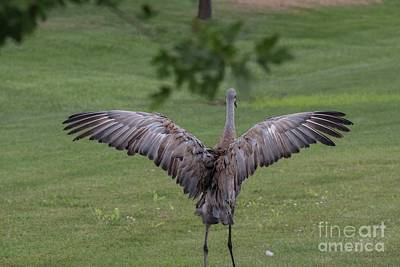 Photograph - Sandhill Crane - 4 by David Bearden