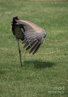 Photograph - Sandhill Crane - 7 by David Bearden