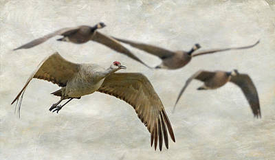 Sandhill Crane And Company Print by Angie Vogel