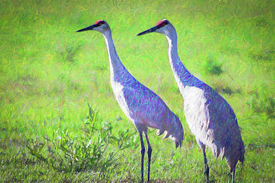 Photograph - Sandhill Crane Couple by Richard Goldman