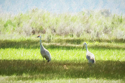 Photograph - Sandhill Crane Family, No. 2 by Belinda Greb