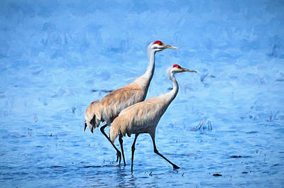 Photograph - Sandhill Crane Impressions by Greg Norrell