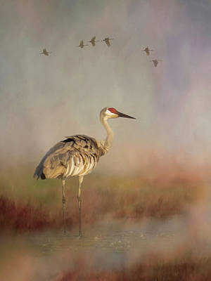 Photograph - Sandhill Crane - Painterly Vertical by Patti Deters