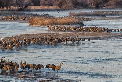 Photograph - Sandhill Crane Platte River  by Kathy Adams Clark