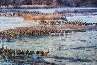 Sandhill Crane Platte River - Textured Art Print