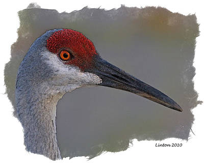 Crane Digital Art - Sandhill Crane Portrait by Larry Linton