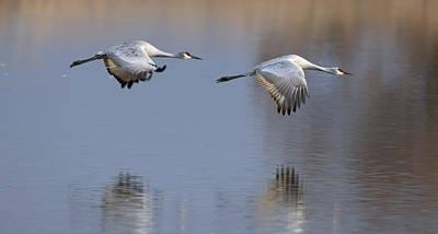 Apache Lake Photograph - Sandhill Crane Returning by Gary Langley