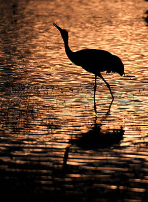 Silhouettes Photograph - Sandhill Crane  Silhouette by Gary Langley
