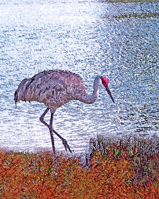 Crane Digital Art - Sandhill Crane Stroll Painted by Adele Moscaritolo