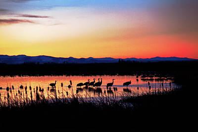 Photograph - Sandhill Crane Sunrise by Mike Flynn
