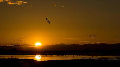 Photograph - Sandhill Crane Sunrise by Stephen Holst
