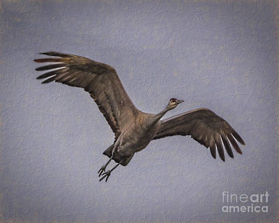 Left-wing Painting - Sandhill Crane Take Off by Janice Rae Pariza